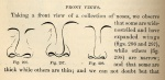 Illustration from the section on noses, New Physiognomy by Samuel R. Wells, 1867.