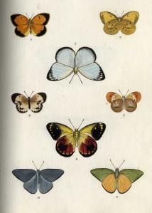 butterfly014