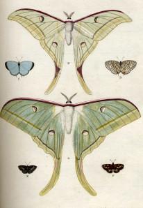 butterfly015