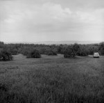The future site of Hampshire College, August 1965. (image 65-007-3 neg 4)
