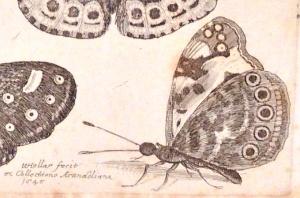 Etching by Wenceslaus Hollar, 1646