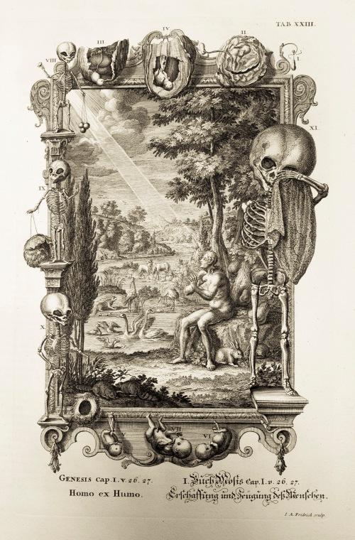 Illustration of baby skeletons from Physica Sacra, Johann Jakob Scheuchzer, 1731